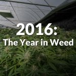 2016: The Year in Weed