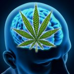 Marijuana Boosts Memory in Aging Brains