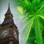 United Kingdom May Be World's Largest Exporter of Cannabis