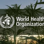 World Health Organization Won't Regulate CBD, Recommends Rescheduling Cannabis