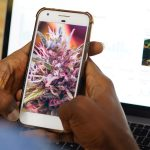 California Launches Social Media Campaign to Combat Cannabis Black Market